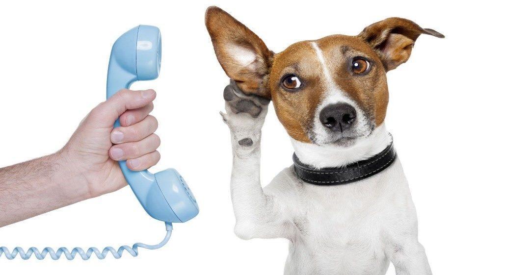 Communication animale 1080x561