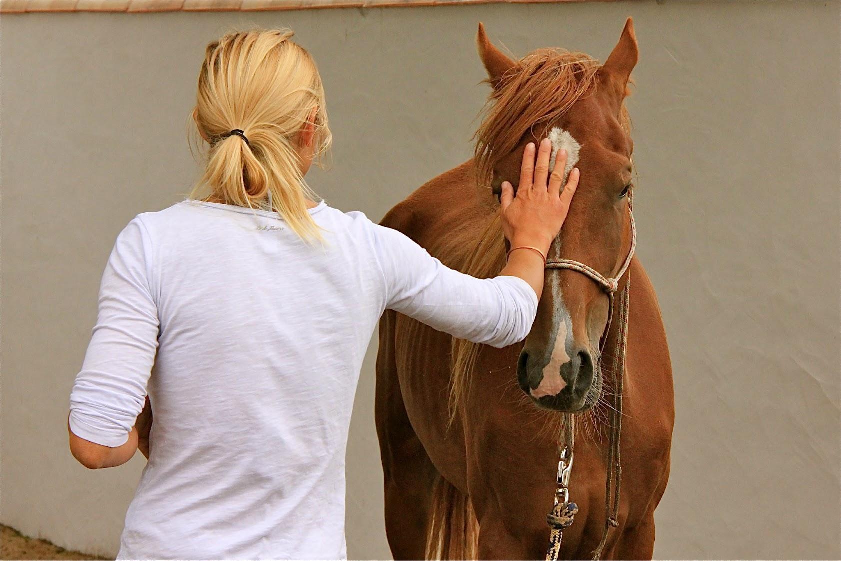 Reiki chevaux luxembourg